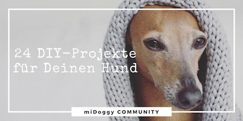 selber machen Hund DIY do it yourself Halsband Hundebett Leine