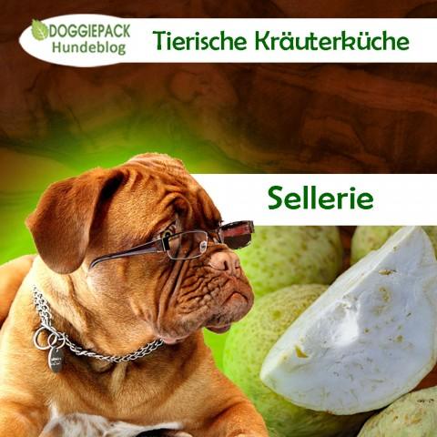 Wie gut ist Sellerie für Hunde?