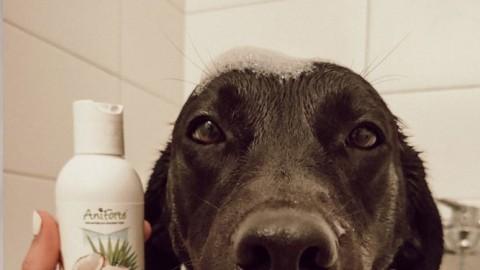 Den Hund Baden – 5 Tipps