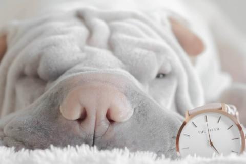 Das Schnarchgeheuer – Warum schnarchen Hunde?