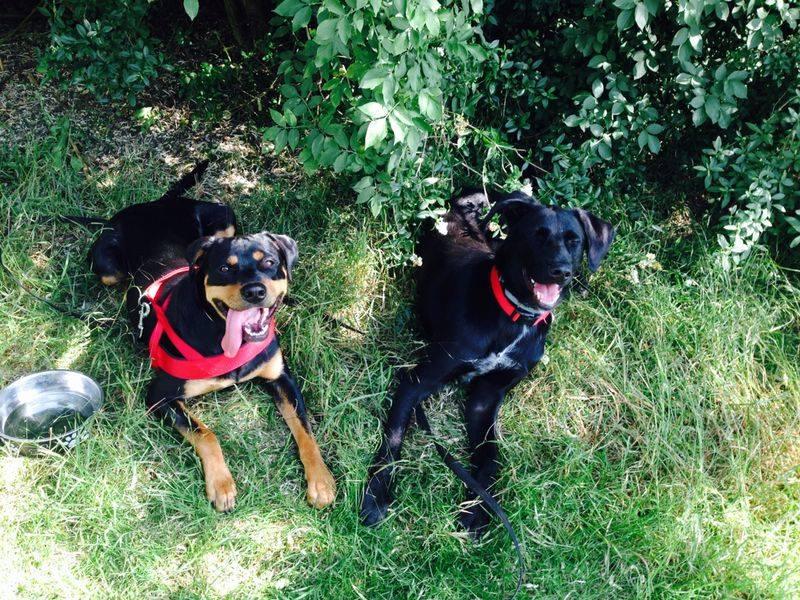 Erfahrungen Hundeerziehung