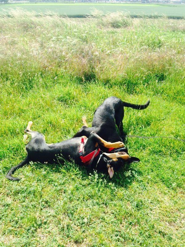 sozialer Kontakt zwischen Hunden