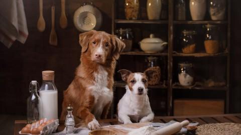 Getreide im Hundefutter – schädlich oder sinnvoll?