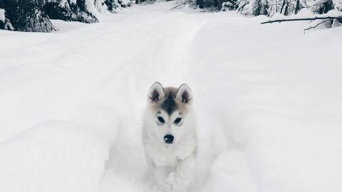 5 Facts über die sibirische Husky-Dame Sky!