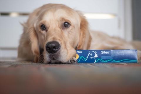 Beruhigungsmittel für Hunde zu Silvester – Erfahrungsbericht Sileo