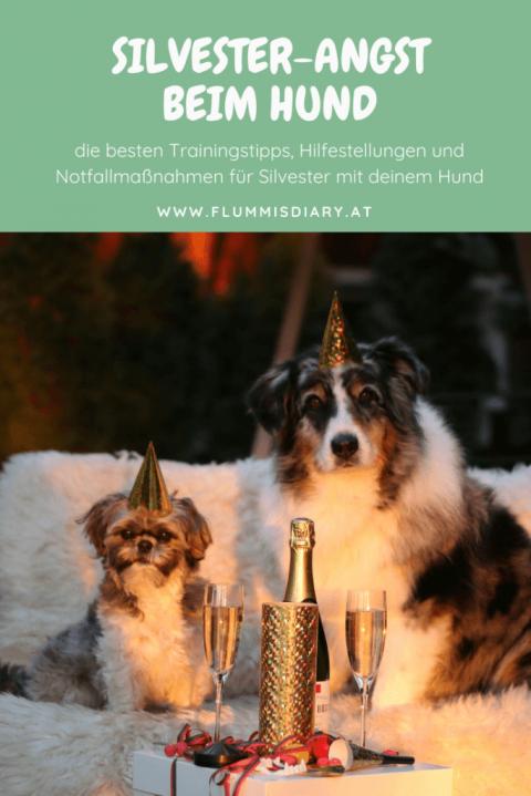 Entspanntes Silvester mit Hund – die besten Tipps!