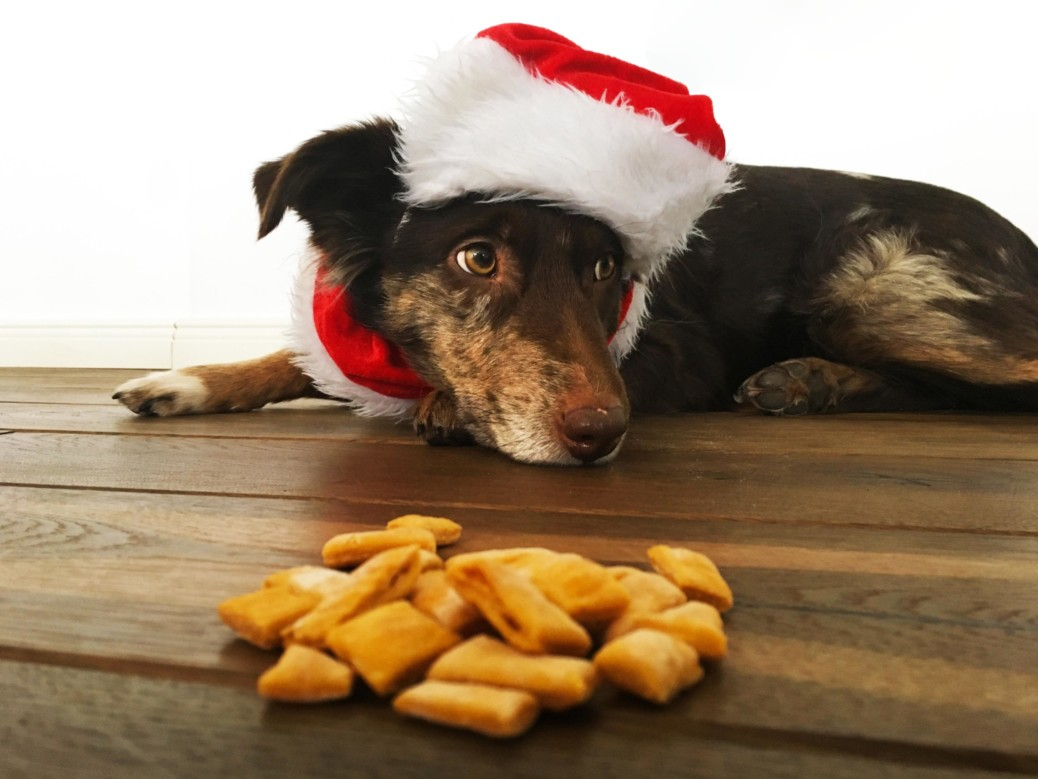 Weihnachtskekse für Hunde selberbacken