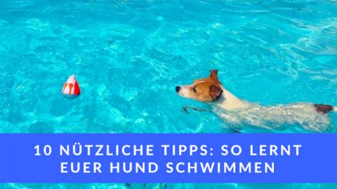 10 nützliche Tipps: so lernt euer Hund schwimmen