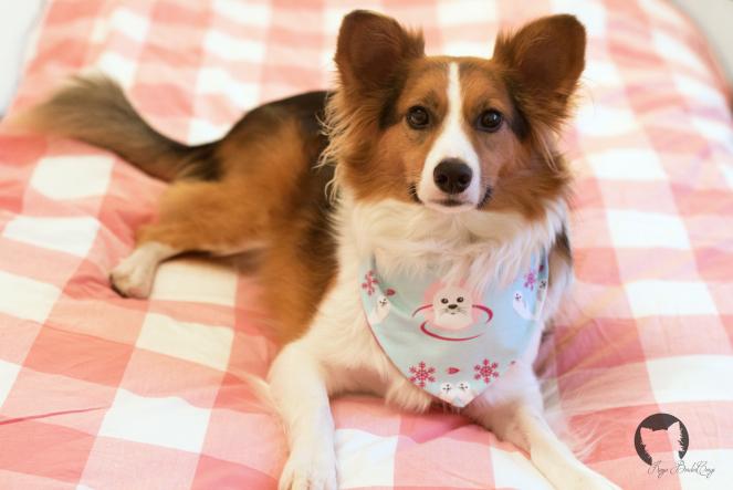 DIY Wendebandana für Hunde