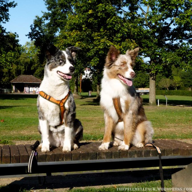 stadttraining mit Hund