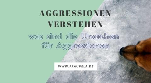 Aggressionen verstehen – was sind die Ursachen dafür?