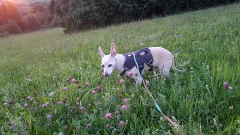 Hundeliebe – Tara`s Geschichte: 6th Chance statt 2nd Chance