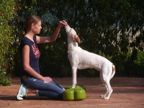 Diagnose OCD – zwei Übungen, die die Reha unterstützen