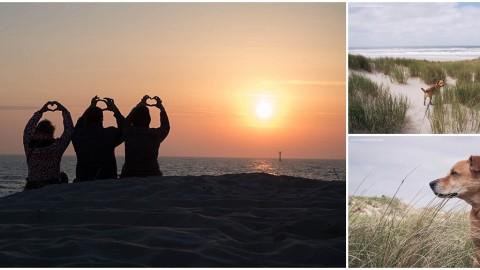 Texel: Campingurlaub mit Hund zwischen Muttertag und Pfingsten