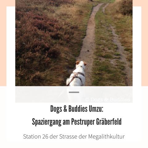Dogs & Buddies Umzu: Spaziergang am Pestruper Gräberfeld