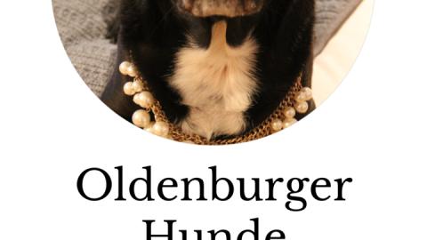 Oldenburger Hunde – ein Puggle namens Mia