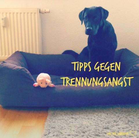 So lernt Dein Hund alleine zu Hause zu bleiben – Tipps gegen Trennungsangst