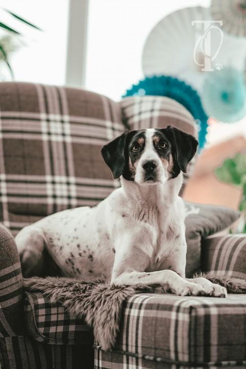 5 geniale Spiele, um deinen Hund drinnen zu beschäftigen