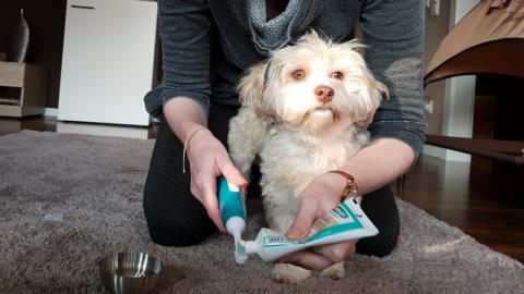 Zähne putzen mit der Emmi-Pet: Unser Erfahrungsbericht