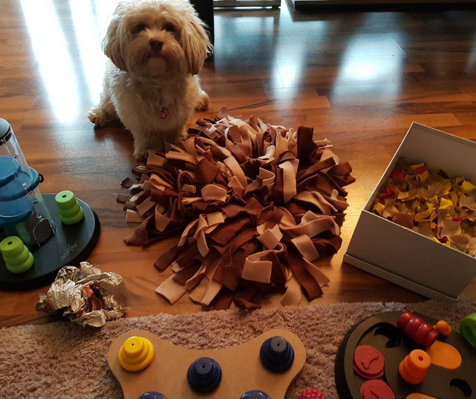 Beschäftigunsgideen für Deinen Hund