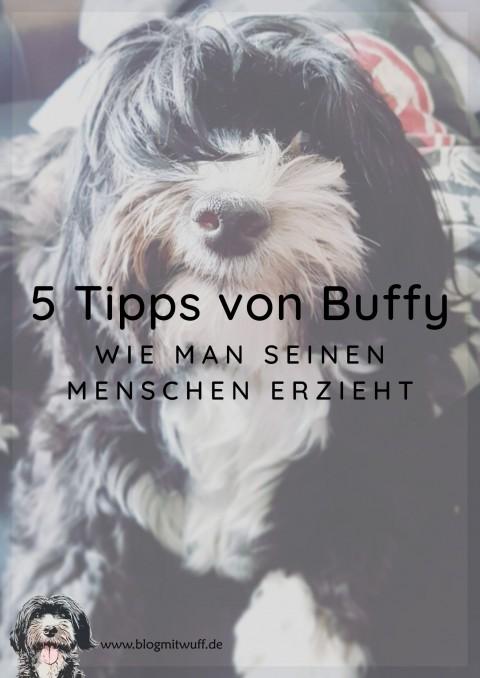 Wie man seinen Menschen erzieht – 5 Tipps von Buffy