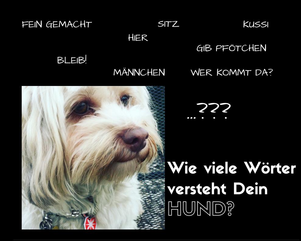 Wie viele Wörter versteht ein Hund?