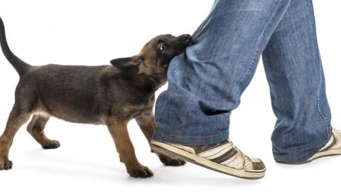 Wie Du erkennen kannst, wann Dein Hund beißen wird.