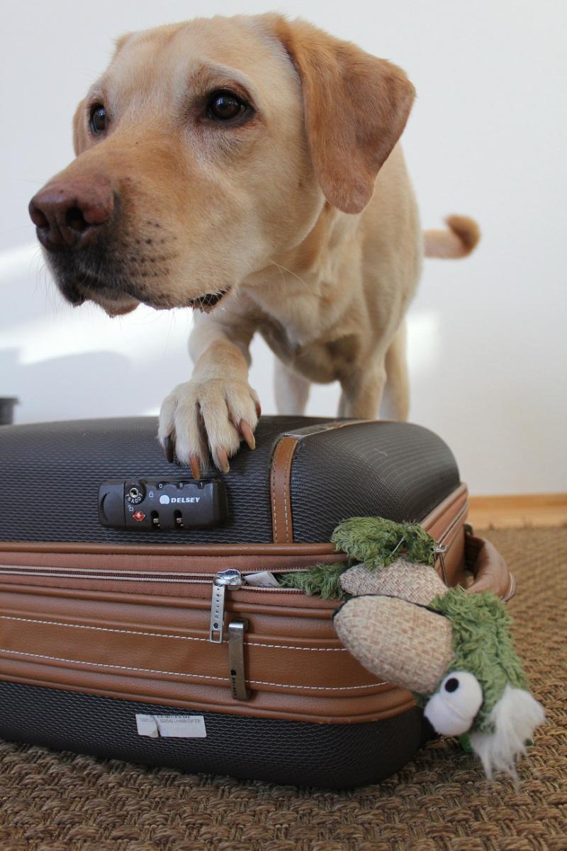 Packliste Hund