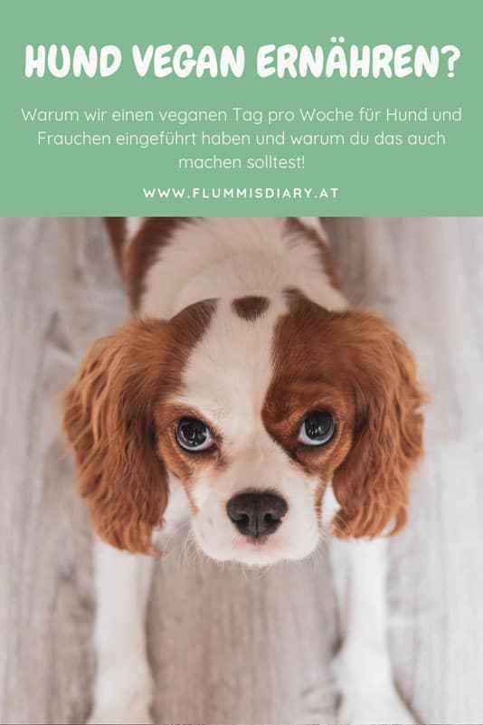 Die besten, nachhaltigen Öko Spielzeuge für Hunde im