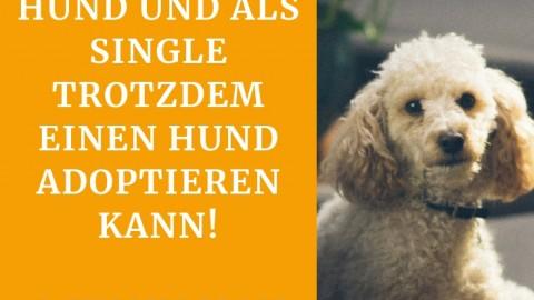 Single, Vollzeitjob & Hund – geht das überhaupt?