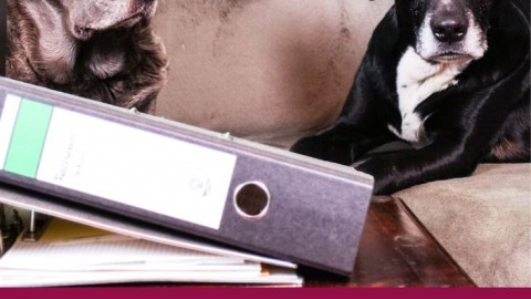 Ein Hoch auf Bürohunde