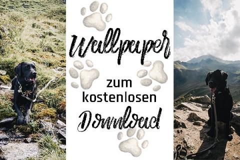 Labrador Wallpaper – Jetzt gratis auf Flummi's Diary downloaden
