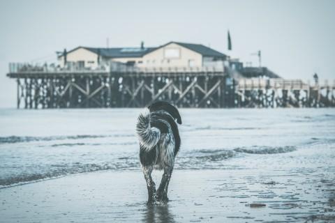 Vorbereitung: Europareise mit Hund