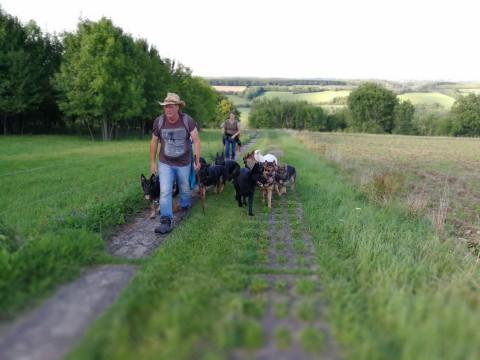Zwei Wochen auf Rudelwanderung mit zwölf (!) Schäferhunden