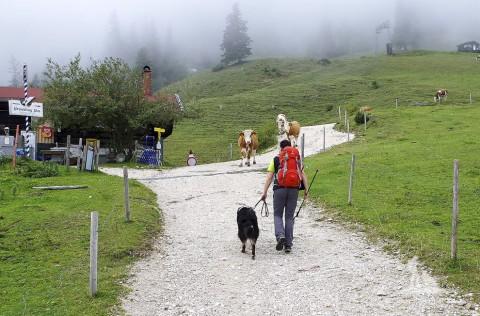 Wandern mit Hund und Kühe auf der Alm: Diese 5 Dinge musst Du wissen!