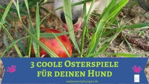 3 coole Osterspiele für deinen Hund