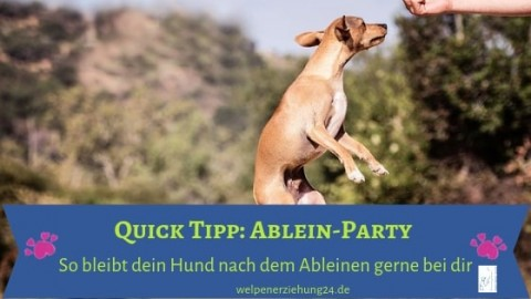 Quick Tipp: Die Ablein-Party