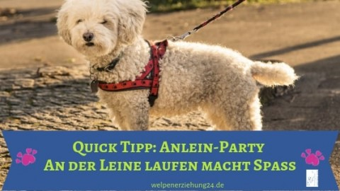 Quick Tipp: Anlein-Party