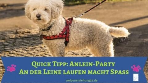 Quick Tipp: Anlein-Party