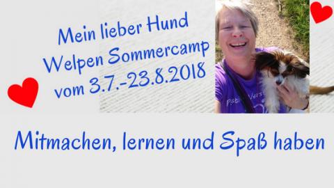 Welpen Sommercamp mit spannenden Online-Trainings