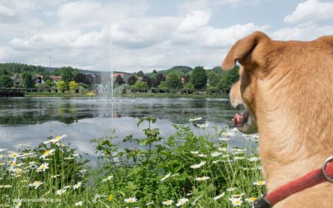 Weiskirchen – Urlaub mit Hund im nördlichen Saarland
