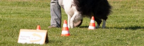Was ist… Rally Obedience?