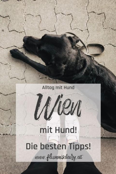 Wien mit Hund – so war unser Wochenende