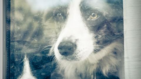 Seelenhunde – Hunde für die Seele?