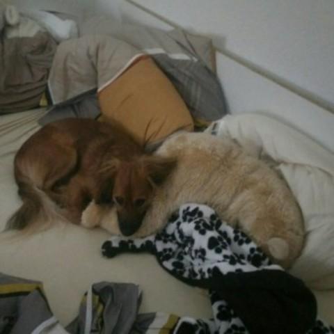 Ein Hund im Bett, dass ist nett!