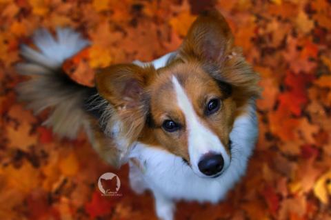 Leinenaggressivität – machen andere Hunde Kaya's Erziehung kaputt?