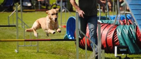 Diese 7 Dinge solltest du unbedingt beachten, wenn du mit deinem Hund im Agility aktiv sein möchtest