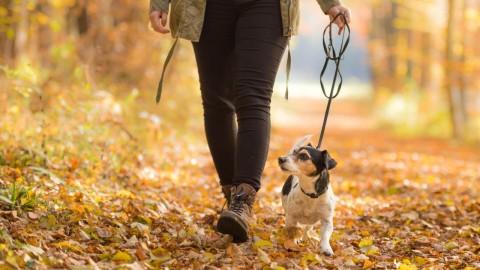 Die TENETRIO Checkliste für Spaziergänge mit deinem Vierbeiner