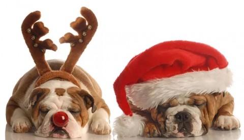 Eine sichere Weihnachtszeit für unsere Hunde