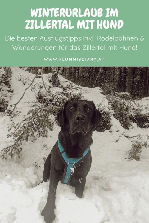 Tipps für den Urlaub im Zillertal mit Hund im Winter